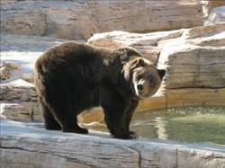 grizzly bear need an environment to live